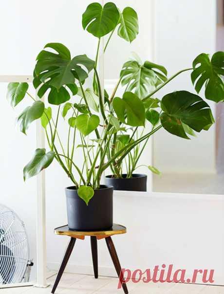 7 самых неприхотливых домашних растений