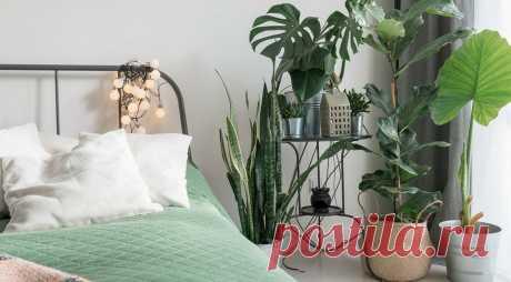 10 классных интерьеров-джунглей для любителей комнатных растений | ИДЕИ ВАШЕГО ДОМА | Яндекс Дзен