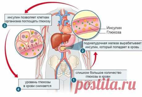 Как понять, что повышен уровень инсулина Любая пища, попадающая в рот, вызывает повышение уровня глюкозы в крови. Чтобы ее компенсировать, поджелудочная железа вырабатывает определенное количество инсулина, которое зависит от состава пищи.