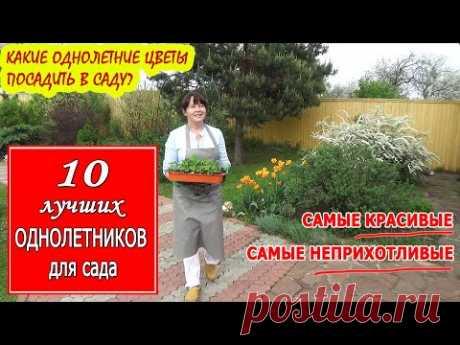 10 лучших ОДНОЛЕТНИХ цветов и растений для сада. Самые НЕПРИХОТЛИВЫЕ и КРАСИВЫЕ однолетники!