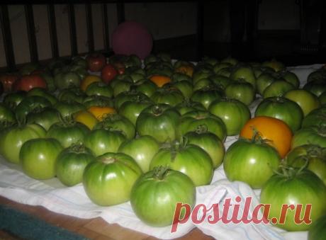 Знаете почему помидоры нельзя хранить в холодильнике? | 6 соток