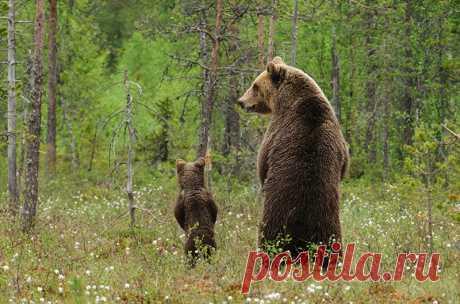 Всё, как у людей: самые трогательные семейные фото животного мира — Болтай