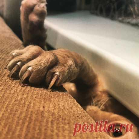 Какие постелить полы, если в доме есть собака? Ответ простой: для животных нет ничего лучше чем spc ламинат на каменной основе. Смотрите на официальном сайте в Брянске  #ламинатдлясобаки#полдлясобаки#какойламинатеслиестьсобака#ламинатдляживотных#ламинатдлященка#Брянск#Stonefloor