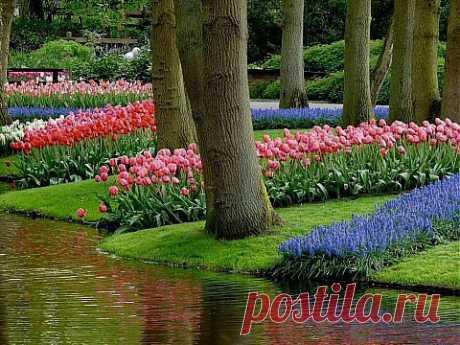 """Fwd: Парк цветов Кёкенхоф - """"ПолонСил.ру - социальная сеть здоровья"""" - ikalinovska@mail.ua - Почта Mail.Ru"""