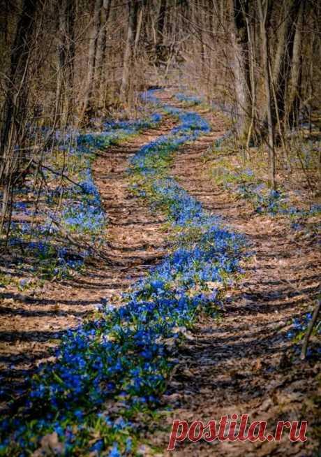 Дорога по которой шла весна...