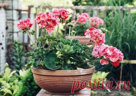 4 plants which have to be in each apartment | the Darling I about twenty Years ago the fashion on plants in the house was general. Now to grow up something on window sills it is already not so popular. And it is vain! According to scientists, existence of houseplants well influences the atmosphere in the house and a psychoemotional condition of the person. Of course, to you to decide what to get and what flowers to get, but there are plants of the category must have which have to be in the house regardless of yours...