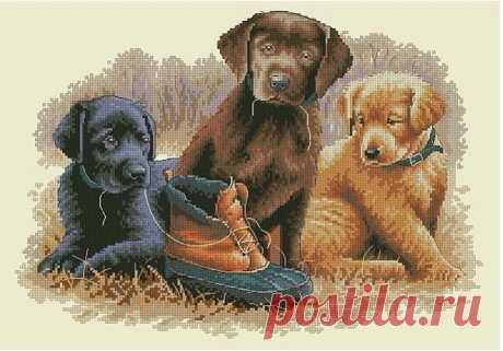 Вышивка крестом схемы щенки. Схема вышивки щенки с ботинком