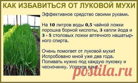 #ОвощеводствоПарники  Огородникам на заметку!