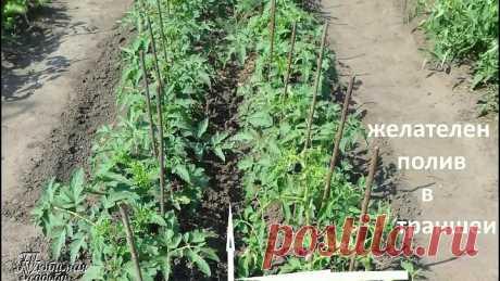 4 principal gobernaba la cultivación exitosa de los tomates. Excluimos las faltas básicas de la cultivación de los tomates
