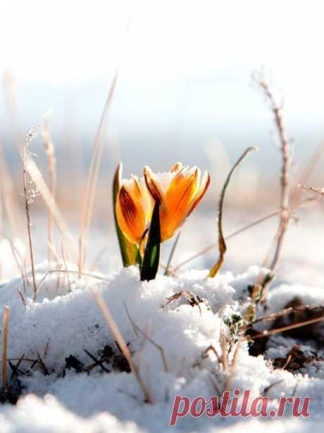 Март – он как сама жизнь. Никогда не знаешь, каким будет завтрашний день – солнечным или пасмурным, пойдёт ли снег или дождь, растают сосульки или, напротив, вырастут новые. Но самое главное то, что солнце в любом случае повернулось в твою сторону и со дня на день раскроются листья, расцветут цветы, птицы совьют гнёзда. По-любому. Без вариантов. Цели будут достигнуты, а мечты исполнены. Поэтому всегда помни – как бы ни было холодно сейчас, впереди всё равно много-много солнца.