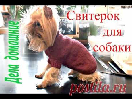 """Как связать свитер для собаки своими руками.Одежда для собак на канале""""Дела домашние"""""""