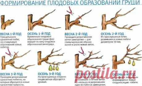 (1) Огород и дача.