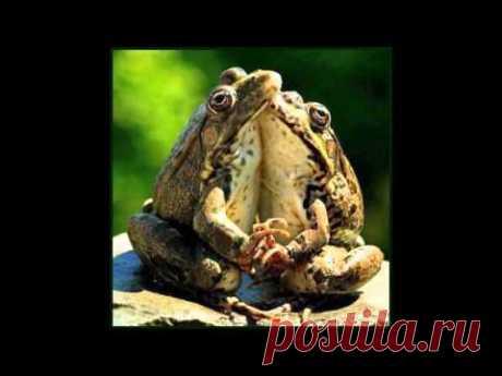 СВЕЧА!!! ОТВЕТЫ НА МНОГИЕ ВОПРОСЫ 2016 Горячо! - YouTube