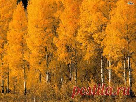 В октябре, неведомо откуда Возвратились теплые деньки. Точно акварельные этюды, Краски дня воздушны и легки.  Так прозрачна золотая осень И, пленяя нежностью сердца, Зримо до сознания доносит Тонкий вкус Великого Творца