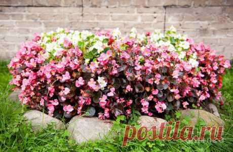 Какие низкорослые цветы посадить в клумбу, чтобы цвели все лето | Все о цветоводстве | Яндекс Дзен