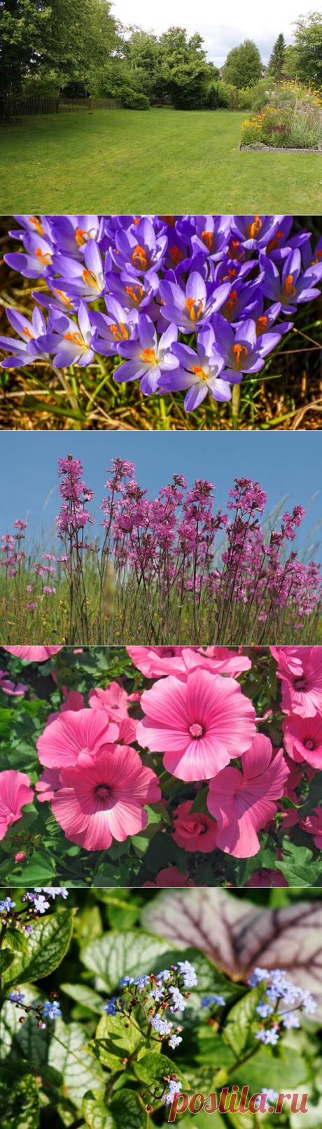 15 растений, которые можно посадить и забыть | В темпі життя