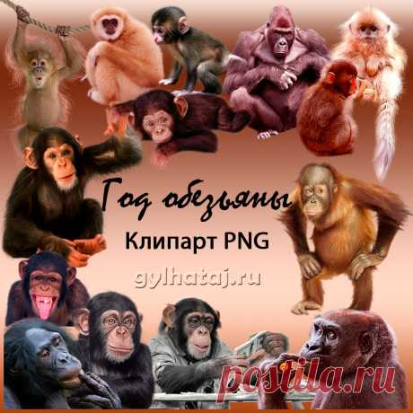 Год обезьяны. Клипарт PNG | Все для фотошопа. Фотошоп для всех