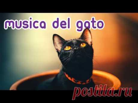 💫Música Magica para Gatos - Relájese y Calme a su Felino al Instante