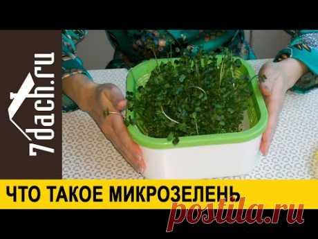 🌱 Что такое микрозелень и как её вырастить - 7 дач