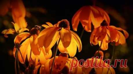 Цветы Оранжевый Оранжевые Лепестки · Бесплатное фото на Pixabay