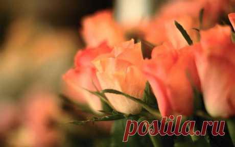 Нежная роза из фоамирана мастер класс _ Foam tutorial