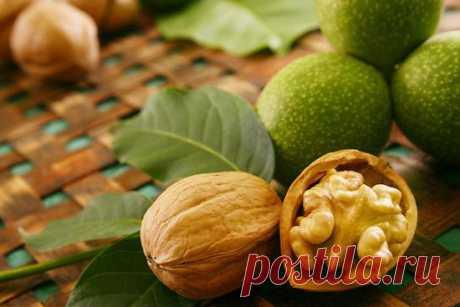 Как выращивать грецкий орех? Разбираемся вместе