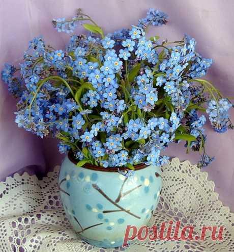 Незабудок глазки голубые Из травы доверчиво глядят: Добрые, наивные, живые — Как у самых маленьких ребят.