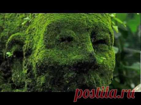 ▶ Сад Орхидей. Сингапур - YouTube
