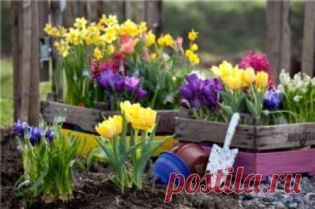 Луковичные цветы: когда и как делать посадки, какие цветы сажать Луковичные цветы: когда и как делать посадки, какие цветы сажать         Как же приятно после зимы увидеть в саду яркие краски ранних луковичных цветов! Чтобы обеспечить себе этот весенний праздник, н…
