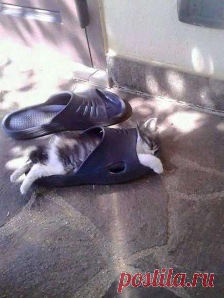 Котейки, которым удобно везде / Питомцы