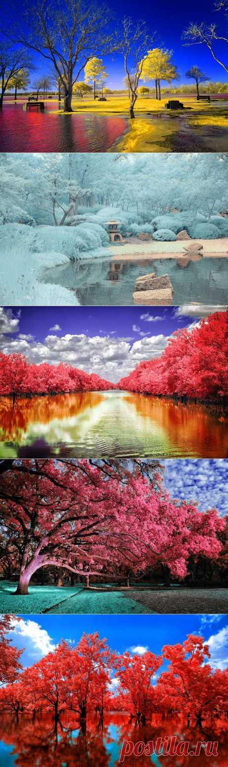 Фантастические инфракрасные фотографии | Fresher - Лучшее из Рунета за день