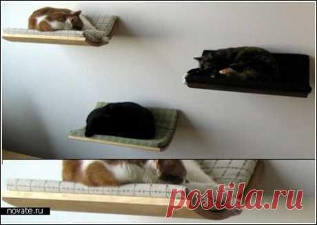 Подвесная полка для ловких кошек и оригинальных хозяев   Идеи вашего дома   Архитектура и интерьер