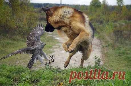igor.kazackovtsev — «Напарники на охоте!!! Не переживайте, они дружат, и никто над ними не издевается! » на Яндекс.Фотках