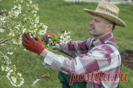 Чем очистить кору плодовых деревьев от мха и лишайника? | Вечные вопросы | Вопрос-Ответ | Аргументы и Факты