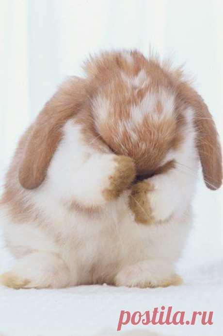 Кролик Банни.