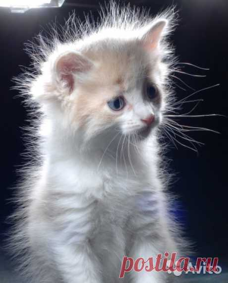Котята 1.5 месяца - купить, продать или отдать в Московской области на Avito — Объявления на сайте Avito