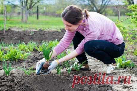 Сезонные работы в саду и огороде: вторая неделя мая