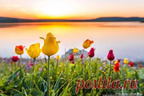 Потрясающие фотографии цветения диких тюльпанов в Крыму!!!