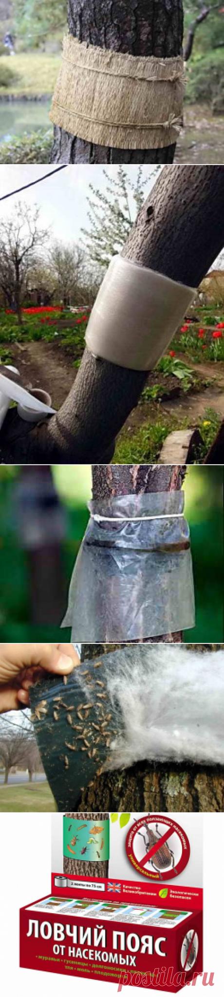 Способы сделать ловчие пояса своими руками, фото | Дача - впрок