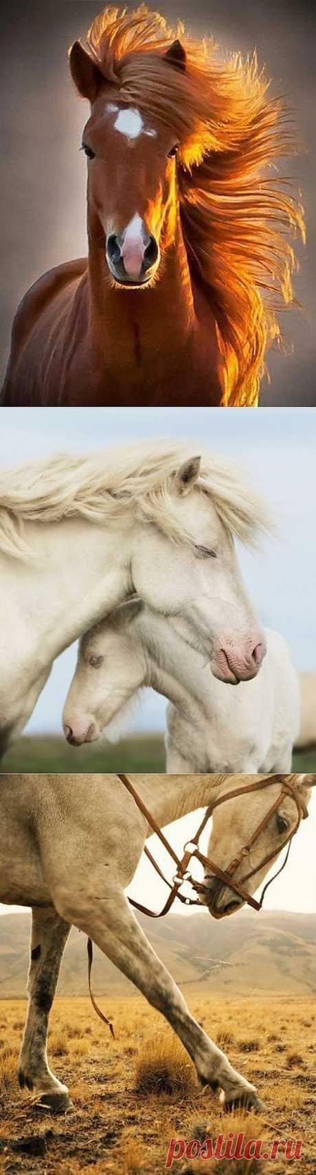 Magnificent, delightful, fantastic and noble horses