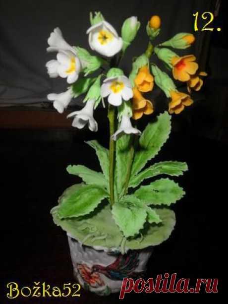 Первоцветы, МК.