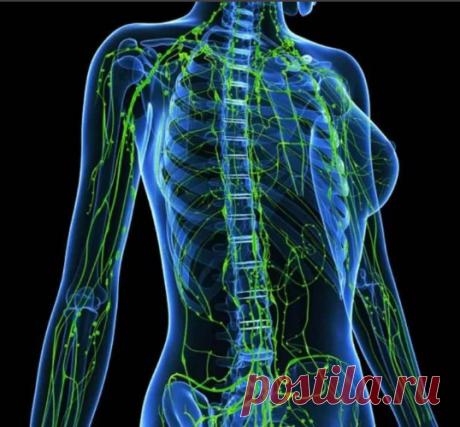 Как за 3 минуты помочь своей лимфатической системе | Жизнь Элен | Яндекс Дзен