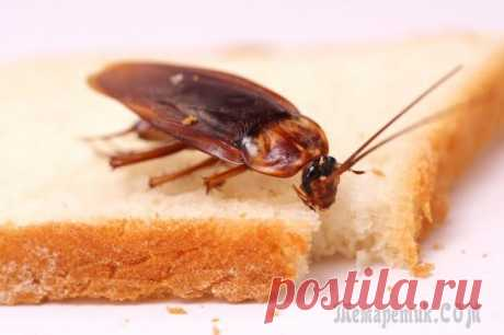 How to get rid of cockroaches in the apartment forever: the effective ways People which has knowledge how to get rid of cockroaches in the apartment forever, can be considered as the genius. Fight against these insects is conducted with variable success: one of the parties is in search on...