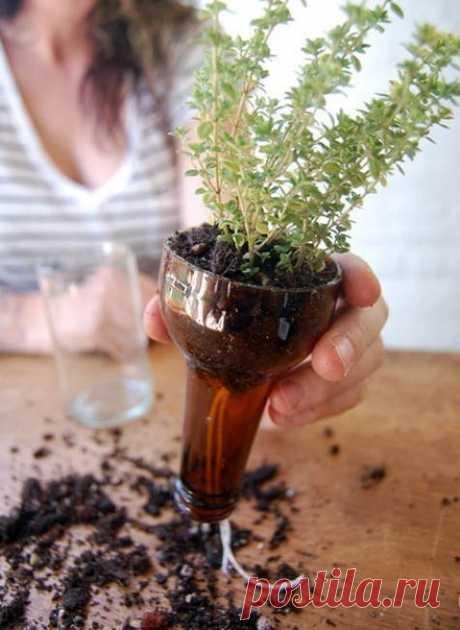 Бутылочный сад - супер идея!