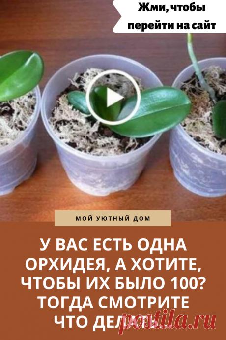 Как размножить орхидею и сделать много