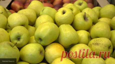 Сушенные яблоки способны понизить уровень холестерина - Новости
