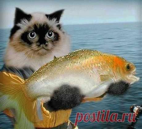 Музыкальная открытка -  С Днем рыбака!