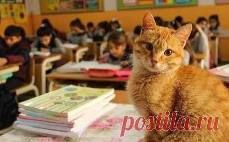 Кот учится в третьем классе и отказывается от еды, когда его не пускают в школу)