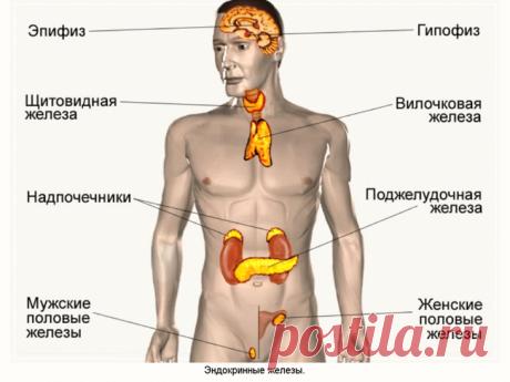 Старение начинается с эндокринной системы