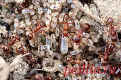 Важно истребить весной муравьев в саду - разносчиков тли! | Огородные дела | Яндекс Дзен